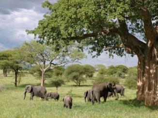 elephant-289134__340