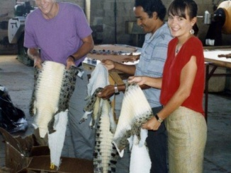 Courtesy of Alecia King   Alumnus Alecia King (right) stands with business partner Keith Cook (left) while purchasing crocodile skins in Papua New Guinea in the late 1990′s. King founded and operated the company Australian Crocodile Traders for over 27 years before selling it to the French handbag company Hermes in 2012. King graduated from Costa in 1983.