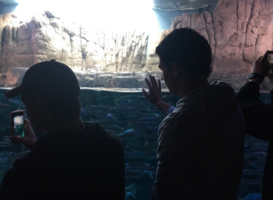 Mira Costa Juniors Luke Sussman and Miles Douglas observe the California Gulf Fish exhibit at the Aquarium of the Pacific. Douglas and Sussman were attending the field trip to the aquarium with their Marine Biology class.